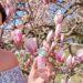 Taschenmesser trifft Parfum: Düfte made in Switzerland